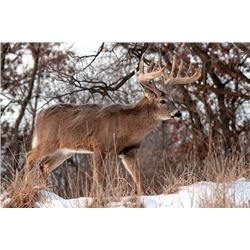 "Two Day Whitetail Buck Hunt for One Hunter up to 170 inch; ($75 per inch over 170"")"