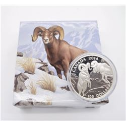 100$ For 100$ Rocky Mountain Bighorn Ram