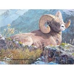 """Rocky Mountain High Bighorn"" by Jan Martin McGuire"
