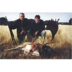 5 Days Red Deer or Fallow Deer or Mouflon Sheep Hunt in Spain for 1 Hunter.