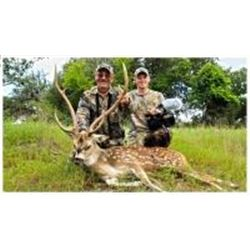 3 Days / 2 Nights Trophy Exotic Hunt for 2 Hunters in Wimberley, Texas.