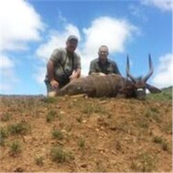 10 Days 1 Bushbuck & 1 Mountain Reedbuck Hunt in South Africa for 2 Hunters.