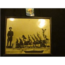 "8"" x 10"" Black & White framed photo of a 1930 era Circus Dog Act."