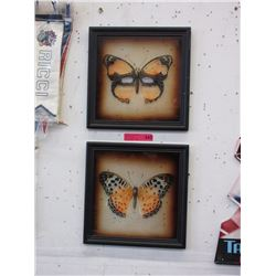 2 Glass butterfly pictures