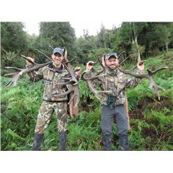 5-Day Red Stag and Rusa Stag Hunt for Two Hunters and Two Non-Hunters in New Zealand - Includes Trop