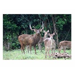 5-Day/4-Night Rusa Deer Hunt for One Hunter and One Non-Hunter on Mauritius Island off the Southeast