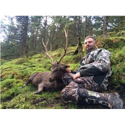 3-Day Sika Stag OR Four-Horned Sheep Hunt for One Hunter in Ireland - Includes Trophy Fee