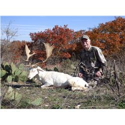 2-Day Whitetail OR Exotic Deer Hunt for Two Hunters and Two Non-Hunters in Texas - Includes Trophy F
