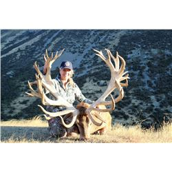 5-Day Red Stag Hunt for One Hunter in South Island, New Zealand - Includes Trophy Fee