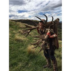 7-Day Red Stag/Tahr/Fallow Deer Hunt for One Hunter and One Non-Hunter in New Zealand - Includes Tro