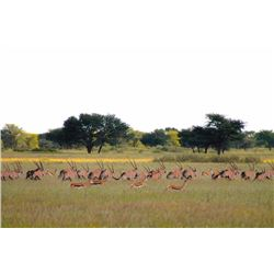 7-Day Plains Game and Wingshooting Safari for Two Hunters and Two Non-Hunters in Namibia - Includes