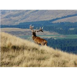 4-Day Red Stag and Chamois Hunt for Two Hunters in New Zealand - Includes Trophy Fees