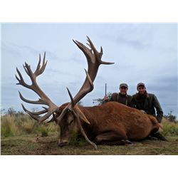 4-Day Red Stag Hunt for Three Hunters in Argentina - Includes Trophy Fees