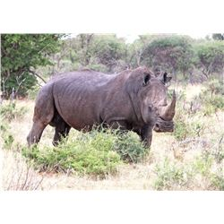 6-Day White Rhino Hunt for One Hunter and One Non-Hunter in South Africa - Includes Trophy Fee