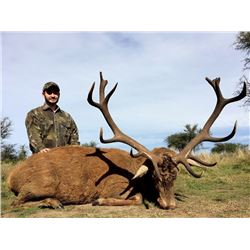 7-Day Red Stag, Boar and High Volume Dove Hunt for Four Hunters in Argentina - Includes Trophy Fees