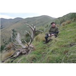 4-Day Red Stag Hunt for One Hunter and One Non-Hunter in New Zealand - Includes Trophy Fee