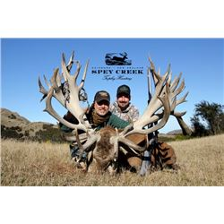 5-day New Zealand Gold Medal Red Stag Hunt up to 400 SCI for Two Hunters