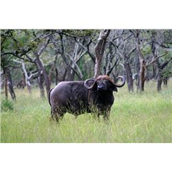 7-day Tanzania Cape Buffalo and Plains Game Hunt for One Hunter and One Observer