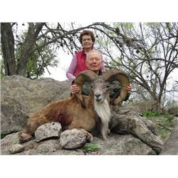 4-day Texas Trans-Caspian Urial Ram and Iranian Red Sheep Hunt for Two Hunters