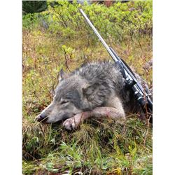 7-day British Columbia Wolf and Wolverine Hunt for Two Hunters