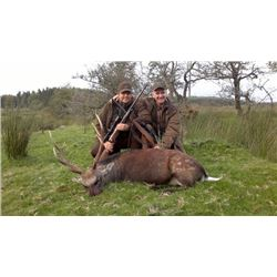 5-day Ireland Free-Ranging Sika Deer, Fox, Rabbit and Wood Pigeon Hunt for One Hunter and One Observ