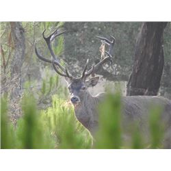 5-day Portugal Choice of Species Hunt for One Hunter and One Observer