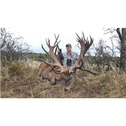 7-day Argentina Red Deer, Blackbuck, Multihorn Sheep and Boar Hunt for Four Hunters