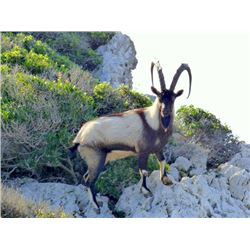 3-day Sapienza Island, Greece Kri Kri Ibex for Two Hunters and Two Observers