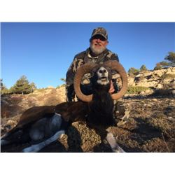 5-day Spain Ibearian Mouflon and choice of Red Deer or Fallow Deer Hunt for One Hunter and One Obser