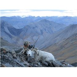 10-day Alaska Dall Sheep, Grizzly Bear, Caribou and Wolf Hunt for One Hunter