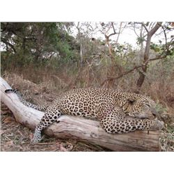 21-day Tanzania Leopard, Buffalo and Plains Game Hunt for One Hunter and One Observer