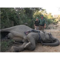 10-day Zimbabwe Tuskless Elephant Hunt for One Hunter and One Observer