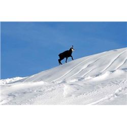 5-day Italy Alpine Chamois Hunt for Two Hunters