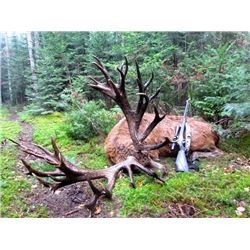 3-day Quebec Red Stag and Elk Hunt up to 400 for Two Hunters