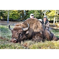 15-day Sweden All-inclusive European Bison, Red Stag, Fallow stag, Roebuck, Wild boar, Capercaille a