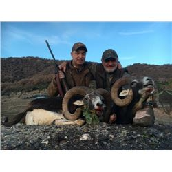 7-day Macedonia European Mouflon Hunt for One Hunter and One Observer