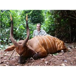 13-day Cameroon Bongo, Dwarf Buffalo and Sitatunga Hunt for One Hunter and One Observer