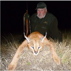 Caracal & Serval With Hounds - A very special double cat hunt in South Africa's Free State!