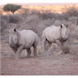 Namibia - Bergzicht Game Lodge – Plains Game Hunt - Experience the African Sun