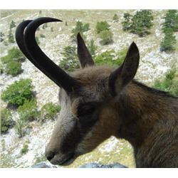 Macedonia – 5 days Hunting for Balkan Chamois with Touring
