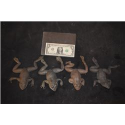 MAGNOLIA TREE FROG LOT OF 4 VERY LAST OF THE FROGS!