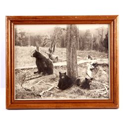 Original Haynes Yellowstone National Park Photo