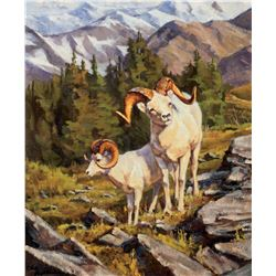 Dall Sheep Low on the Mountain