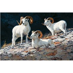 Rams of the Crags