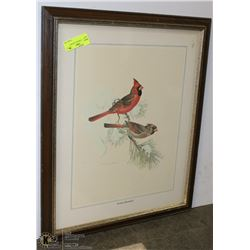 EASTERN CARDINAL FRAMED PICTURE