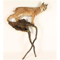 Full Mount Bobcat