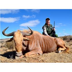 7 day trip for one hunter and one non-hunter to pursue a golden wildebeest, a copper springbuck, and