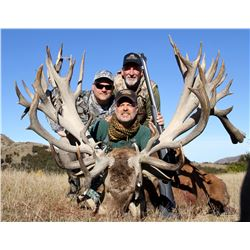 5 - DAY NEW ZEALAND RED STAG HUNT FOR 2 HUNTERS SCORING UP TO 380 SCI