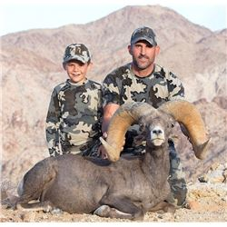 CALIFORNIA DESERT BIGHORN SHEEP