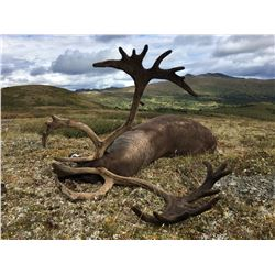 10 - DAY MOUNTAIN CARIBOU AND WOLF HUNT FOR 1 HUNTER IN BRITISH COLUMIBA